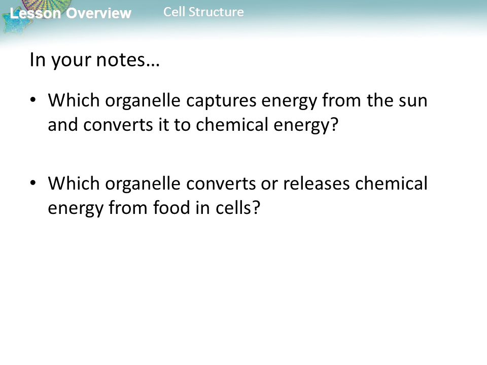 Lesson Overview 7.2 Cell Structure. - ppt video online download