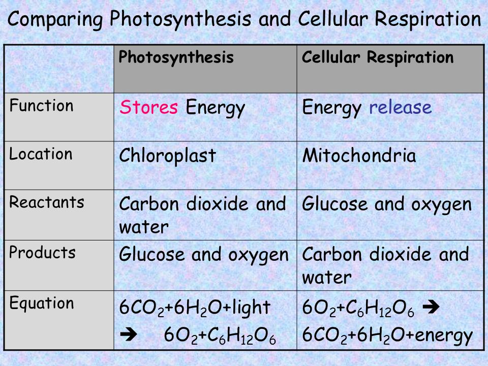 diagram comparing photosynthesis and cellular respiration choice image how to guide and refrence. Black Bedroom Furniture Sets. Home Design Ideas