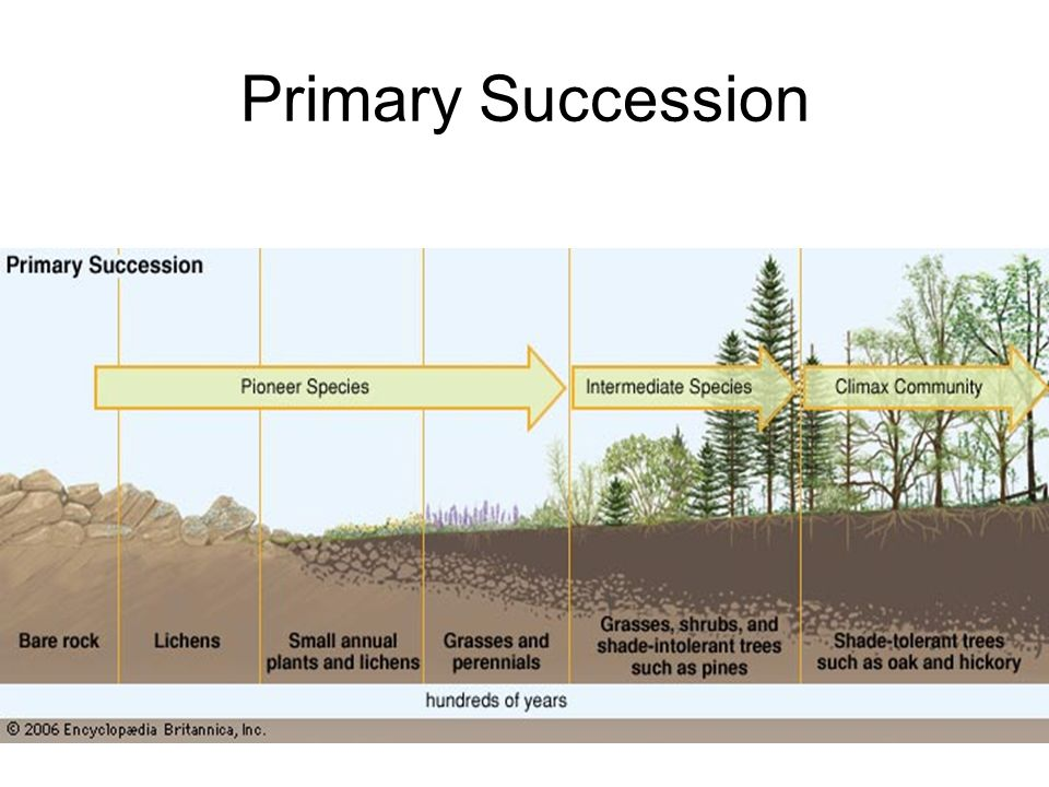 ecosystem succession paper Twenty-four broad hypotheses for trends associated with successional de-  velopment of ecosystems were pre- sented in odum's very important paper.