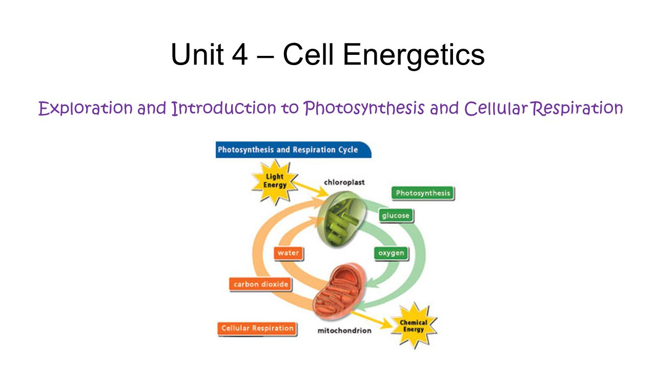 introduction to cellular respiration Cellular respiration must be regulated in order to provide balanced amounts of  energy in the form of atp the cell also must generate a number of intermediate .