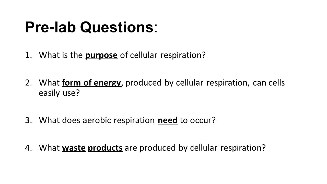 Unit 4 Cell Energetics Exploration and Introduction to – Cellular Respiration Worksheet Answers