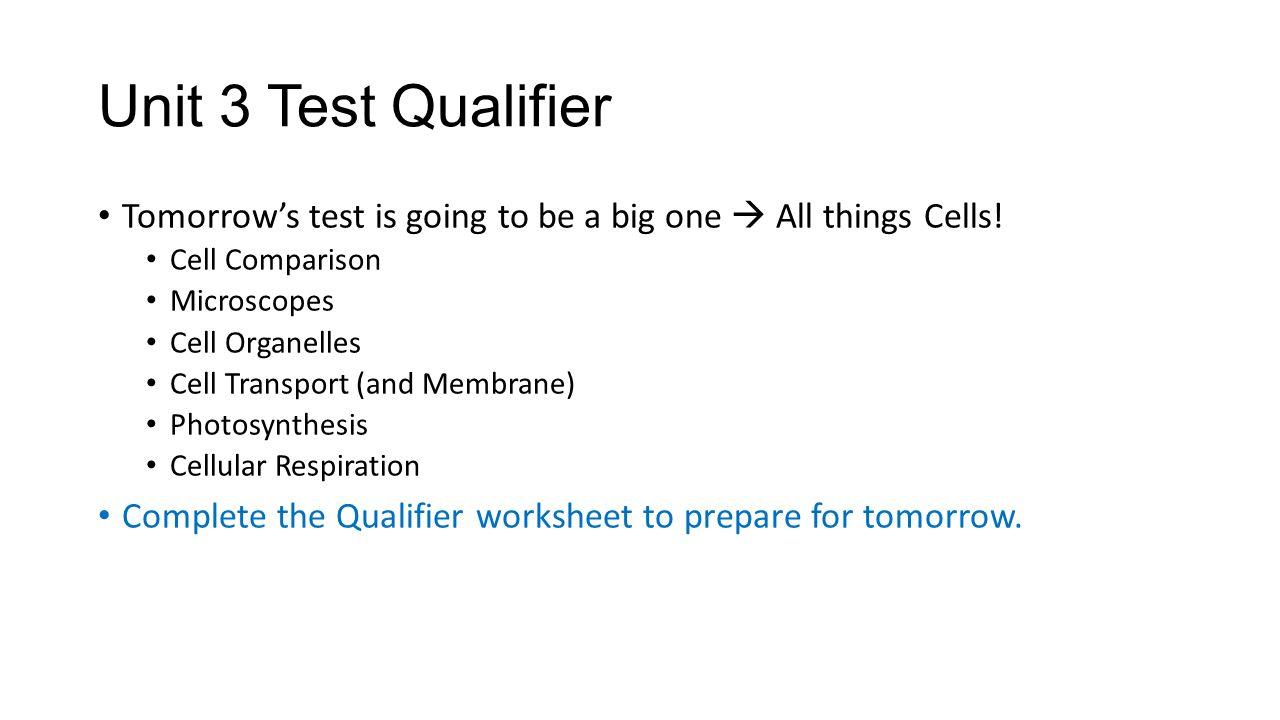 Cell organelles worksheet key