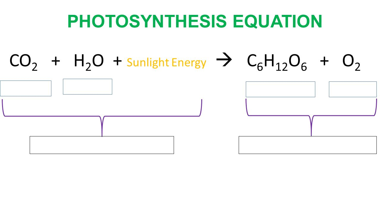 The equation for photosynthesis