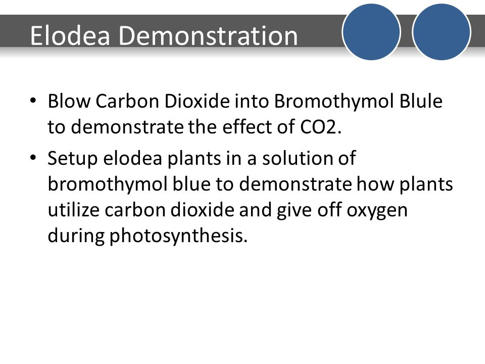 bromothymol blue elodea lab Bromthymol blue solution, acidified to ph 60 by the addition of carbon  obtain  the elodea a few days in advance of the lab and enhance.