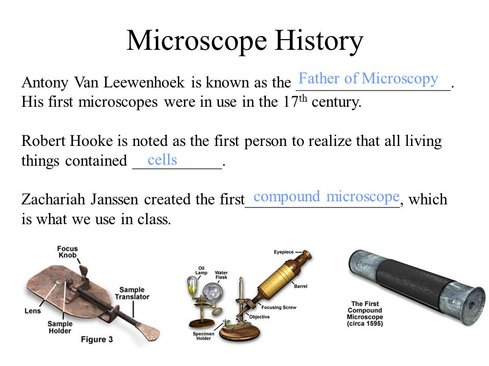 Microscope Basics T. Trimpe ppt download