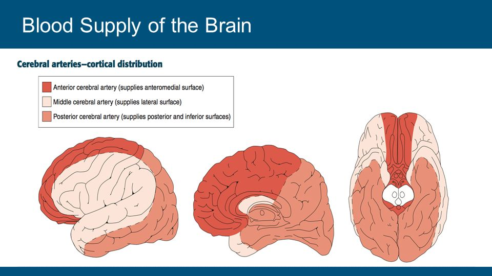 Brain blood supply anatomy 5155668 - follow4more.info