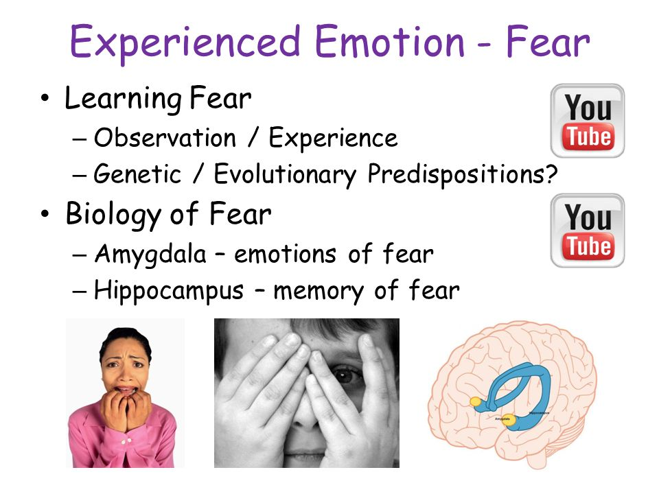 a description of fear in human emotions and physical responses to danger Fear is a normal human reaction that protects us by signaling danger and preparing us to deal with it get the facts about fears and phobias and what causes them  like all emotions, fear.