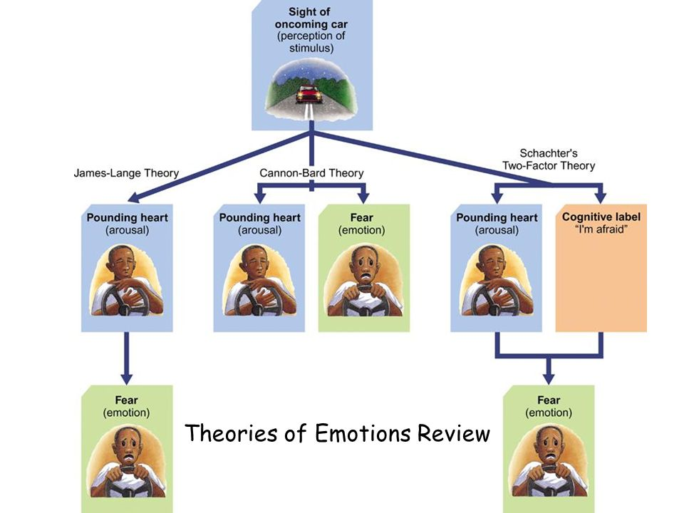 PPT - Motivation and Emotion Review Game: PowerPoint ...