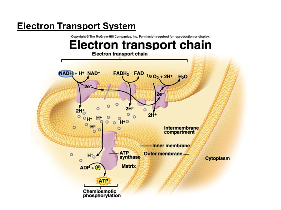 how cells harvest chemical energy The powerpoint ppt presentation: chapter 6: how cells harvest chemical energy is the property of its rightful owner do you have powerpoint slides to share.