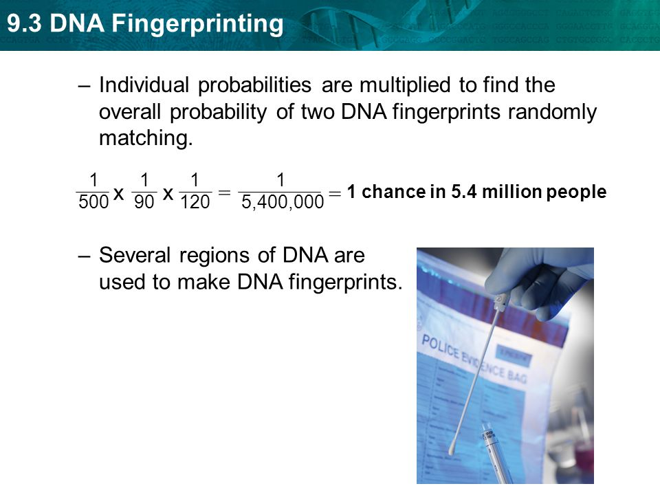 Several regions of DNA are used to make DNA fingerprints.