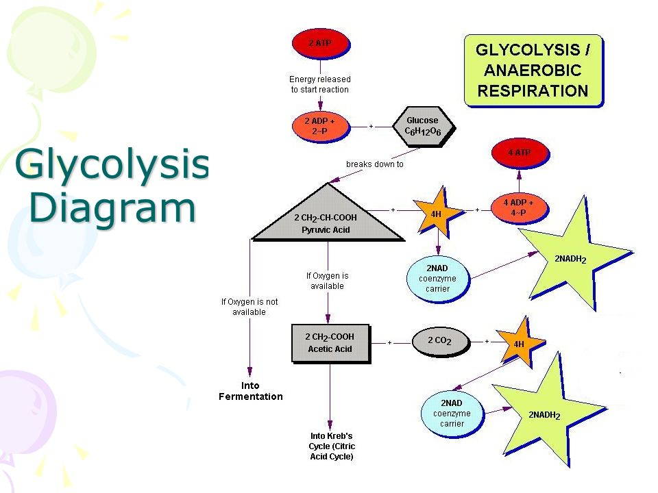 Cellular respiration this is the process by which animals process 27 glycolysis diagram ccuart Choice Image