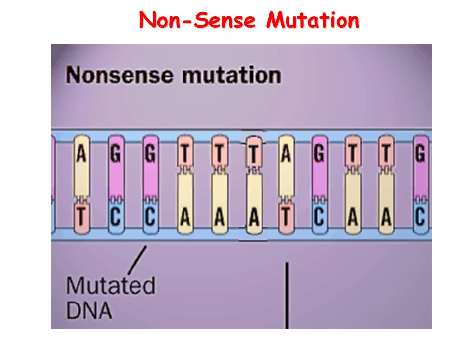 non sense Nonsense-mediated mrna decay (nmd) is a surveillance pathway that exists in all eukaryotes its main function is to reduce errors in gene expression by eliminating.