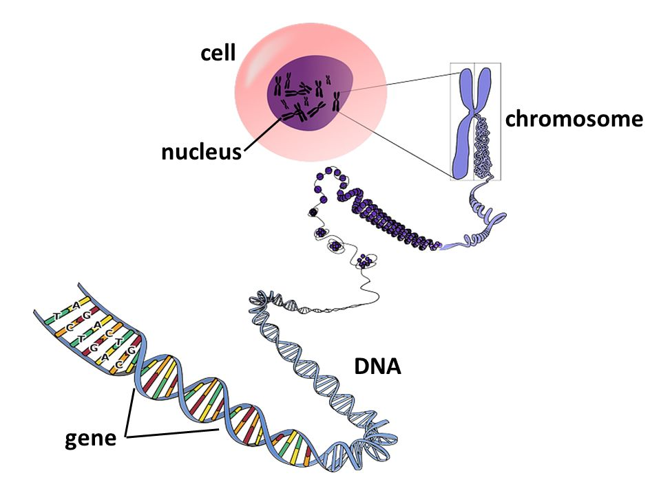 gene and dna relationship to rna