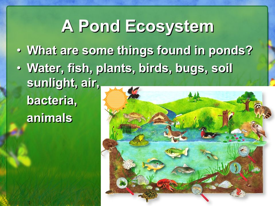 Biotic and abiotic factors ppt video online download for Things found in soil