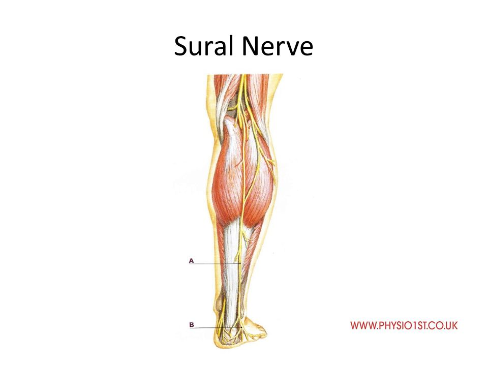Where is the sural nerve. Jill scott insomnia