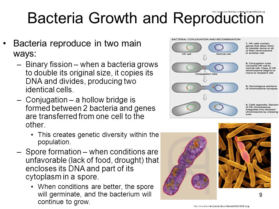 bacteria and pyrokrates