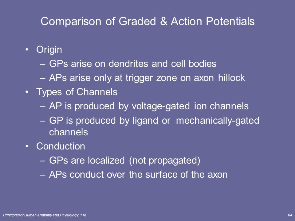 comparison graded potentials to action potentials essay Main difference – graded potential vs action potential the plasma  difference  between graded potential and action potential - comparison summary   graded potentials can be either depolarizing or hyperpolarizing.