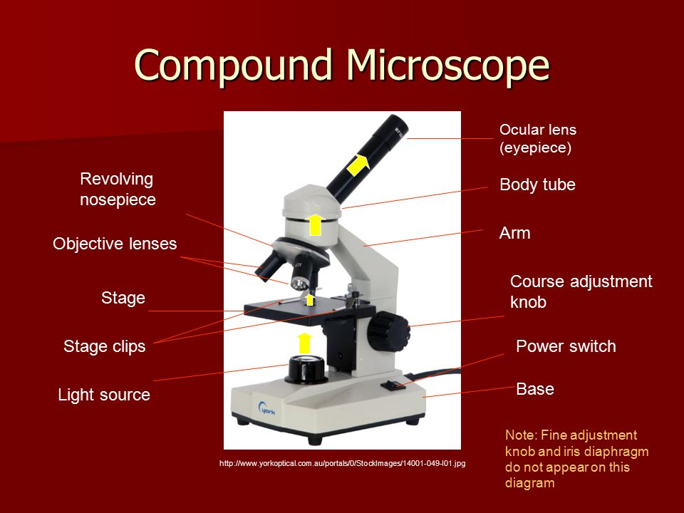 Biology unit c cycling of matter in living systems ppt video compound microscope revolving nosepiece body tube arm objective lenses ccuart Images