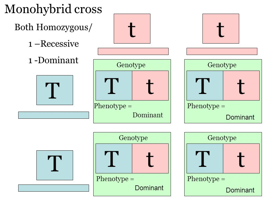 Top 16 Numerical Problems on Monohybrid Cross