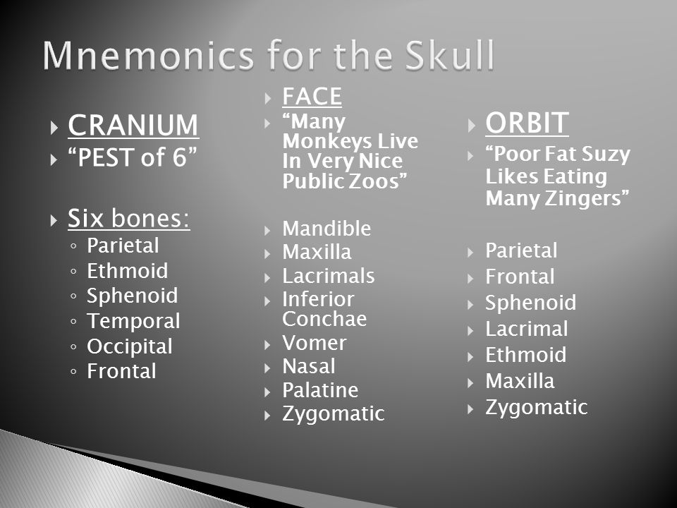 the axial skeleton skull: cranium and face pages - ppt download, Human Body