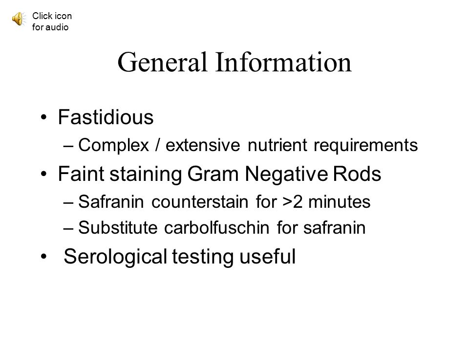 High Quality General Information Fastidious Faint Staining Gram Negative Rods