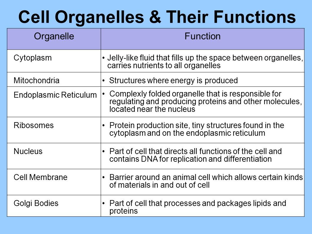 Cellular organelles and structure
