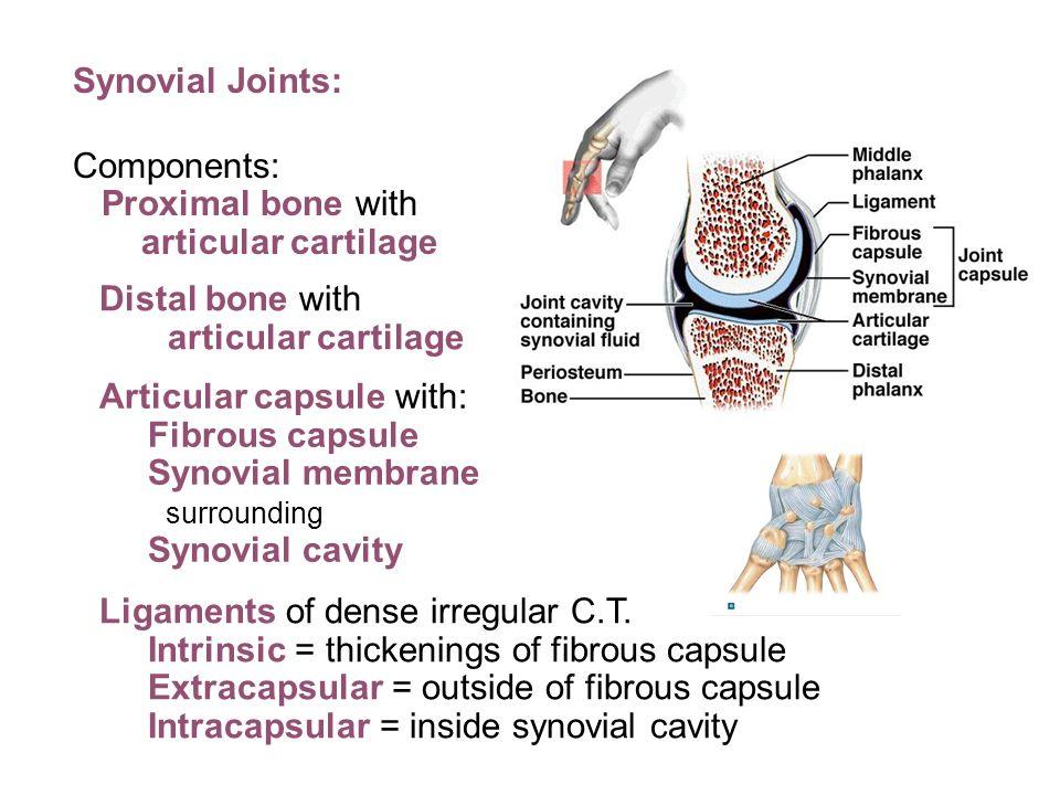 Outstanding Anatomy And Physiology Biology Corner Image - Anatomy ...