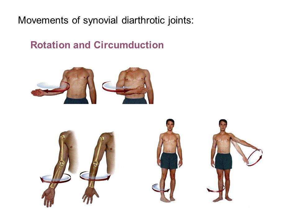 What Is Circumduction In Anatomy