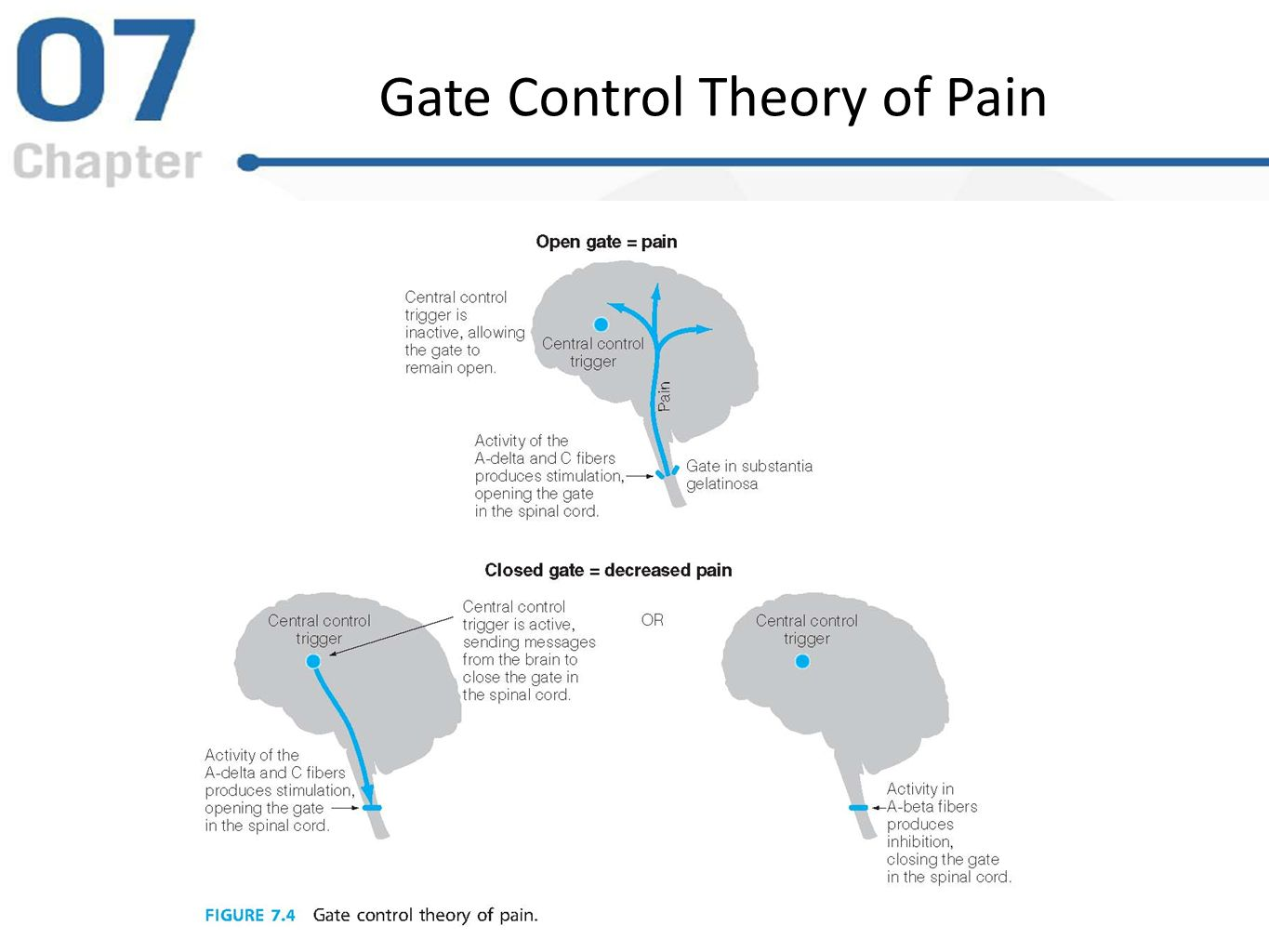 study of gate control theory and pain Applying gate control theory to pain relief therapies using gate control theory to reduce pain one of the most powerful results of the gate control theory is how it has influenced and explained why certain pain treatments are effective.
