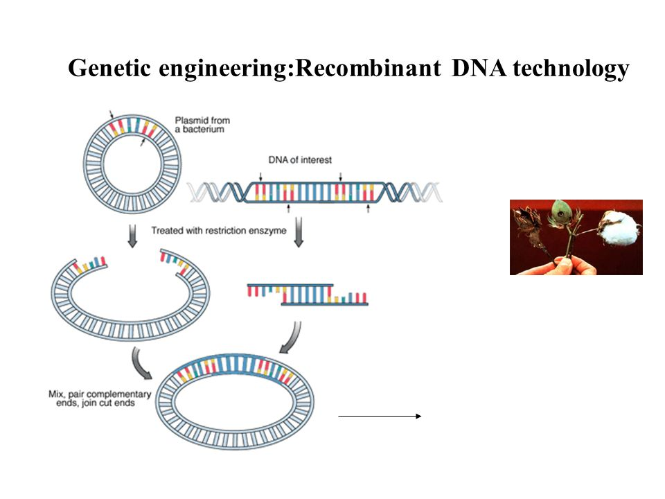 Tag: genetic engineering