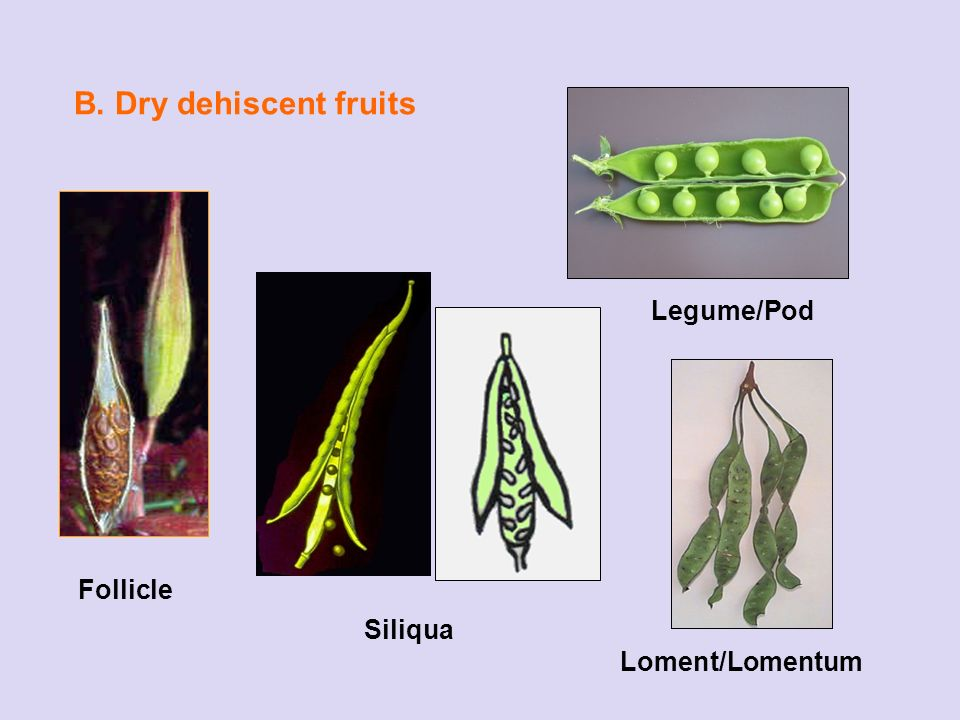 Connu FRUITS Fruits can be divided into three categories: 1. Simple  CQ17