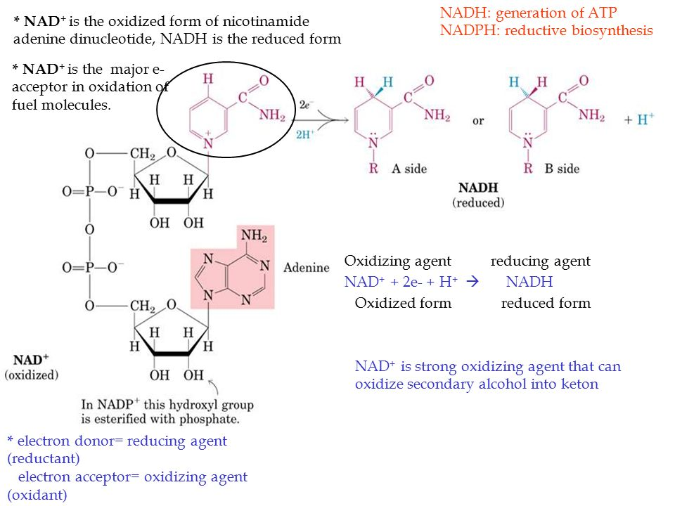 Bioenergetics and oxidative Phosphorylation - ppt video online ...