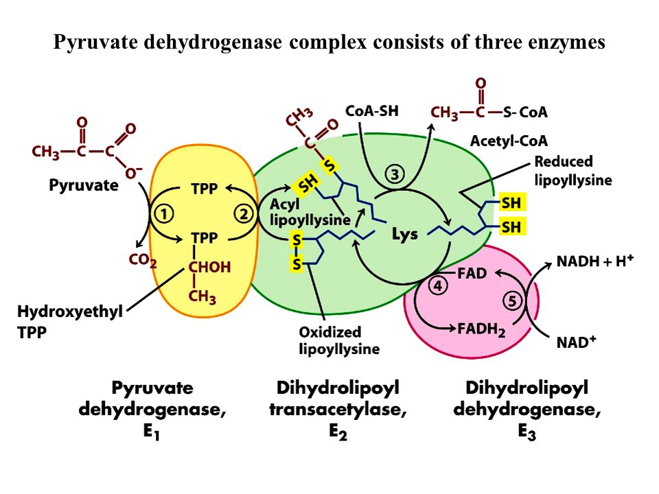 rennet complex of enzymes produced in Rennet is a complex of enzymes produced in any mammalian stomach, and is often used in the production of cheese rennet contains many enzymes, including aproteolytic enzyme (protease) that coagulates the milk, causing it to separate into solids (curds) and liquid (whey).