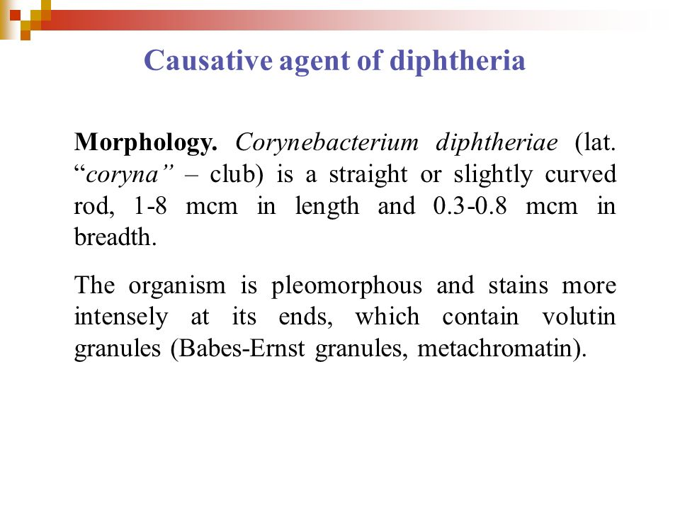 Causative agent of diphtheria