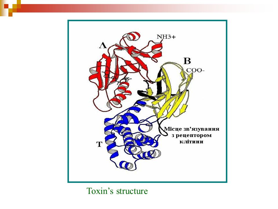 Toxin's structure