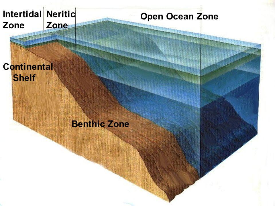 Ocean Zones (shoreline to open ocean) - ppt download