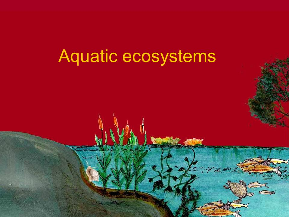 Aquatic Ecosystems Ppt Video Online Download