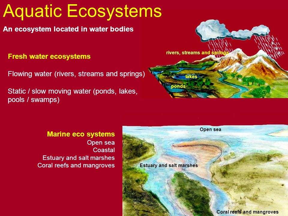 Aquatic ecosystems ppt video online download for Ecosystem pool