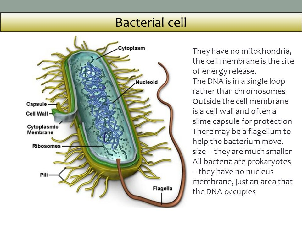 Bacterial Energetics and Membranes
