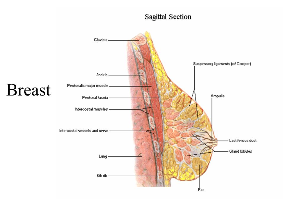 breast growth superficial
