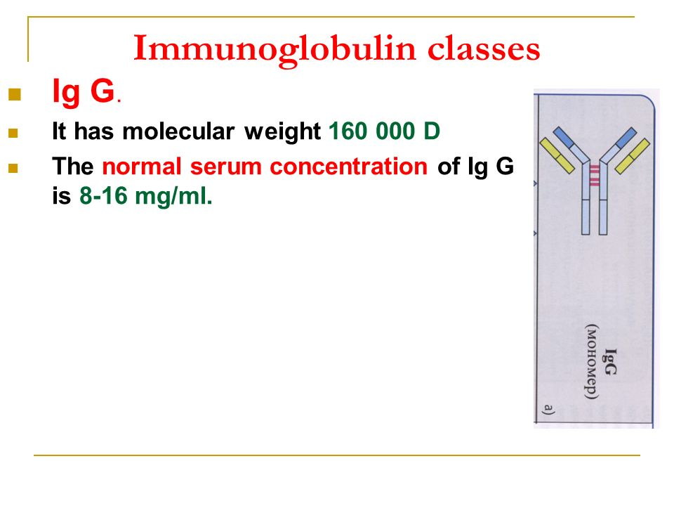 antibodies properties and functions of the immunoglobulins ppt