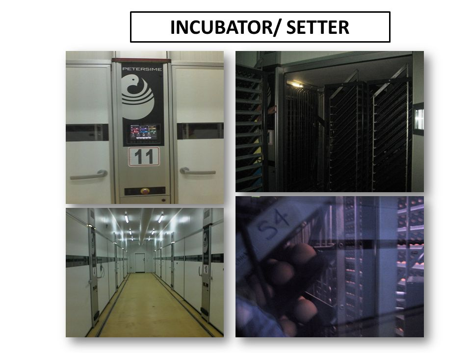 INCUBATOR%2F+SETTER hatchery operations in marcela farms, incorporated at bilar, bohol  at readyjetset.co