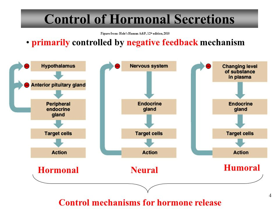 Anatomy and Physiology Part 2: Hormone Control; Pituitary