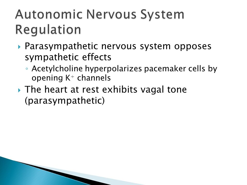 The Cardiovascular System: Part B: The Heart: - ppt video ...