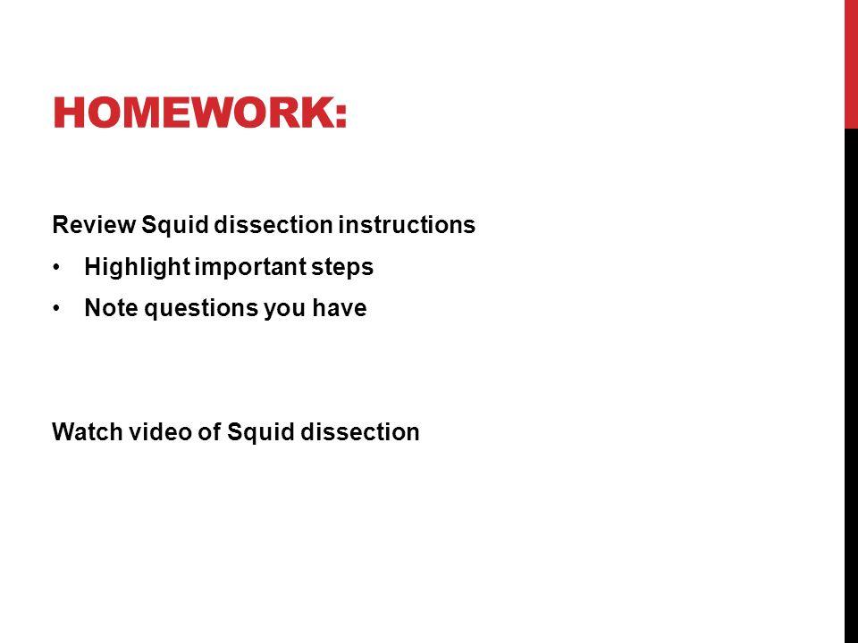 Ziemlich Squid Anatomy And Physiology Zeitgenössisch - Menschliche ...