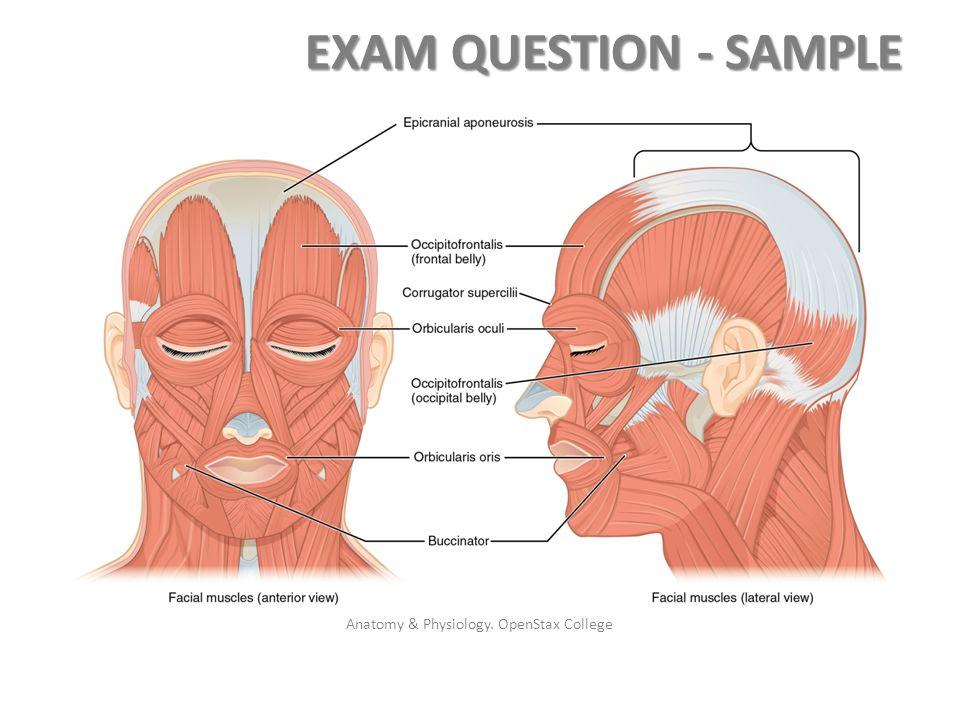 Nett Openstax Anatomy And Physiology Galerie - Menschliche Anatomie ...