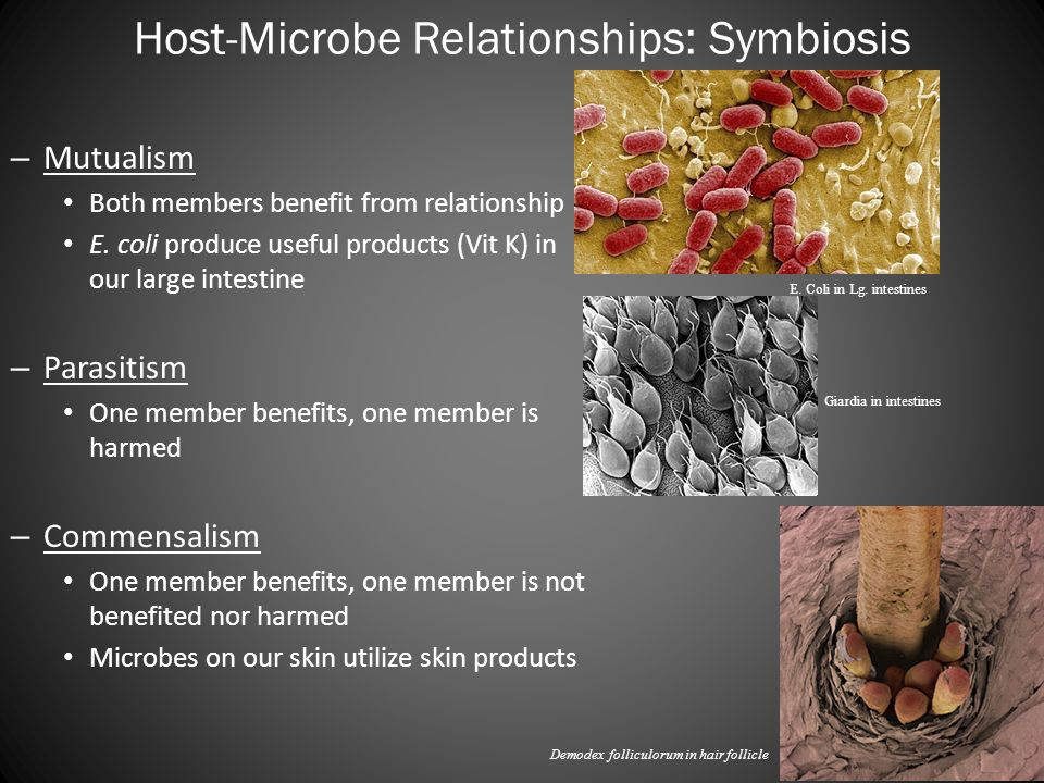 symbiotic relationship of bacteria and human intestines
