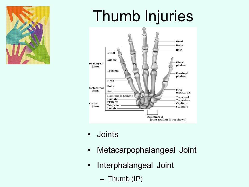 Metacarpophalangeal Joint