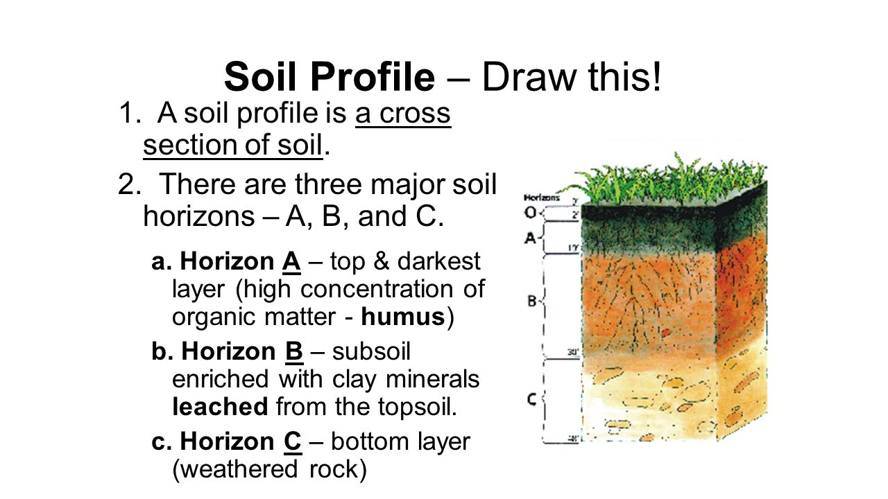Lesson 6 soil ppt video online download for Soil profile video