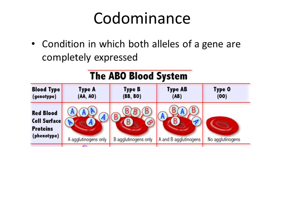 Incomplete Dominance Inheritance in which an active allele does ...